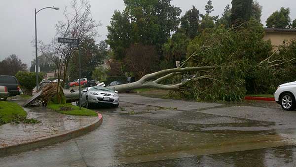 ABC7 viewer Teri Simpson sent in this photo of a tree that crashed down on a car in Encino, Calif., on Sunday March 20, 2011.  When You Witness breaking news, or even something extraordinary, send pictures and video to video@myabc7.com, or send them to @abc7 on Twitter <span class=meta>(KABC photo &#47; Teri Simpson)</span>