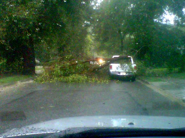 ABC7 viewer Chris Trigg sent in this photo of a fallen tree blocking Buena Ventura Street near the corner of San Feliciano Drive in Woodland Hills on Sunday March 20, 2011.  When You Witness breaking news, or even something extraordinary, send pictures and video to video@myabc7.com, or send them to @abc7 on Twitter <span class=meta>(KABC photo&#47; Chris Trigg)</span>