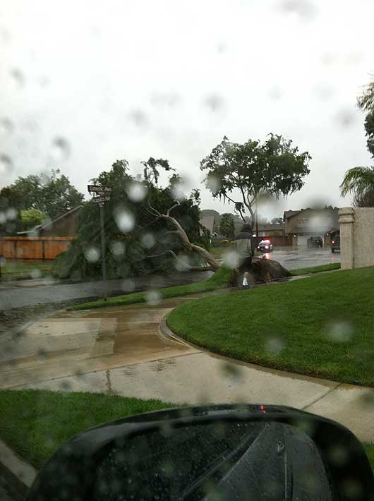 ABC7 viewer Christian Verdugo of Simi Valley, Calif., sent in this photo of a fallen tree on Sunday March 20, 2011.  When You Witness breaking news, or even something extraordinary, send pictures and video to video@myabc7.com, or send them to @abc7 on Twitter  <span class=meta>(KABC photo &#47; Christian Verdugo)</span>