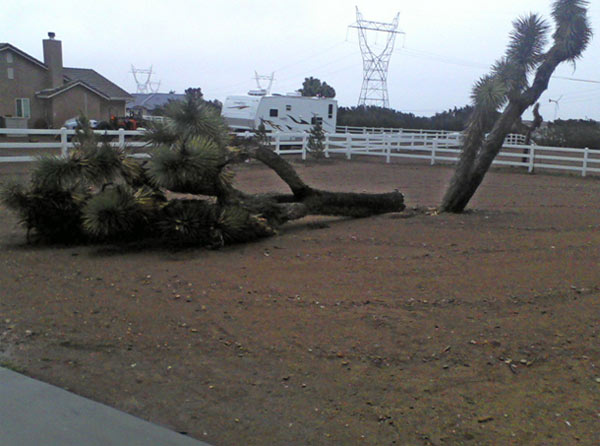 An ABC7 viewer sent in this photo of a downed tree in Oak Hills, Calif. on Monday, March 21, 2011. &#160;When you witness breaking news happen, send your photos to video@myabc7.com, or send them to @abc7 on Twitter <span class=meta>(ABC7 viewer)</span>