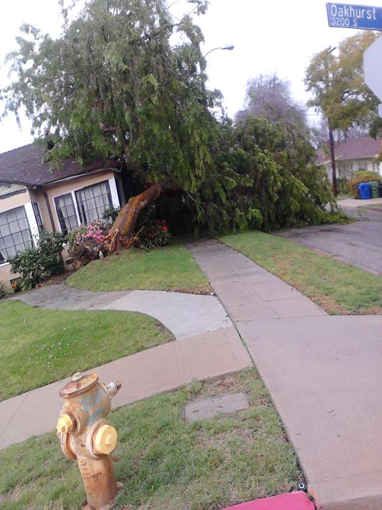 ABC7 viewer Deanna Rabb sent in this photo of a downed tree in Los Angeles on Monday, March 21, 2011. &#160;When you witness breaking news happen, send your photos to video@myabc7.com, or send them to @abc7 on Twitter <span class=meta>(ABC7 viewer Deanna Rabb)</span>