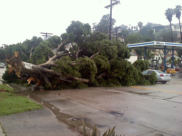 ABC7 viewer Marc Guerra sent in this photo of a downed tree in Eagle Rock on Monday, March 21, 2011.