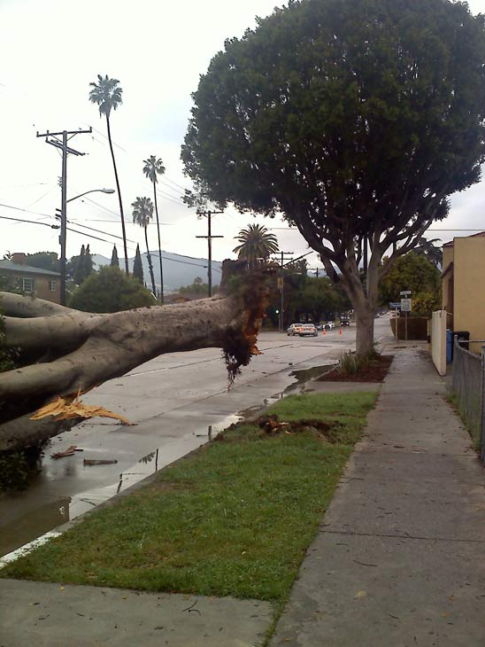 ABC7 viewer Marc Guerra sent in this photo of a downed tree in Eagle Rock on Monday, March 21, 2011. &#160;When you witness breaking news happen, send your photos to video@myabc7.com, or send them to @abc7 on Twitter <span class=meta>(ABC7 viewer Marc Guerra)</span>