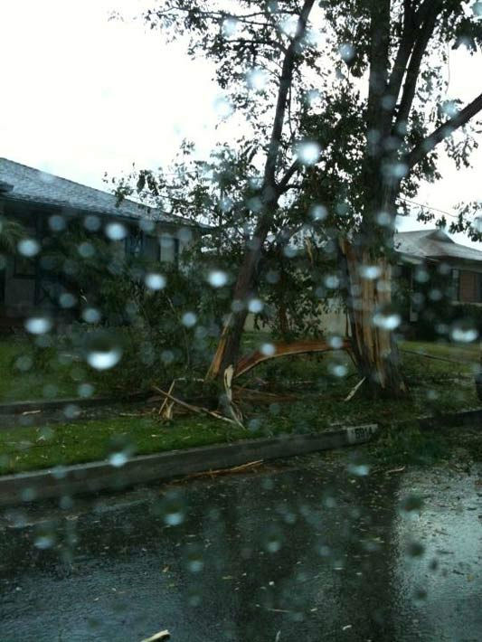"<div class=""meta ""><span class=""caption-text "">ABC7 viewer Christina Hicks of Torrance shows a tree in Lakewood that was struck by lightning on Saturday, Sept. 10, 2011. (Christina Hicks)</span></div>"