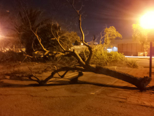 ABC7 viewer Ana Flores sent in this photo of a fallen tree in Inglewood, Calif., on Wednesday, Nov. 30, 2011.  When You Witness breaking news, or even something extraordinary, send pictures and video to video@myabc7.com, or send them to @abc7 on Twitter <span class=meta>(KABC Photo&#47; Ana Flores)</span>