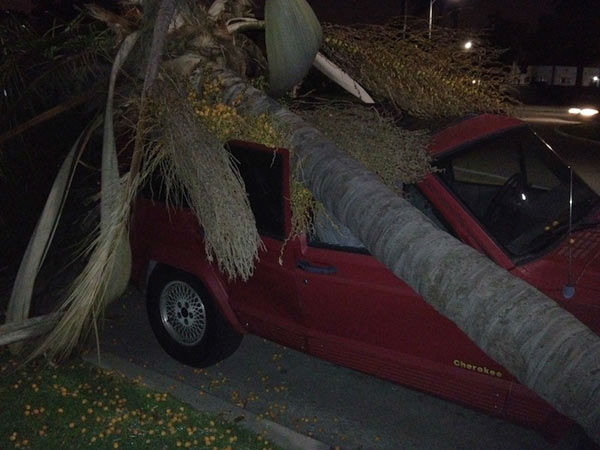 ABC7 viewer Patrice Collier sent in this photo of a tree on top of her car in Los Angeles, Calif., on Wednesday, Nov. 30, 2011.  When You Witness breaking news, or even something extraordinary, send pictures and video to video@myabc7.com, or send them to @abc7 on Twitter <span class=meta>(KABC Photo&#47; Patrice Collier)</span>