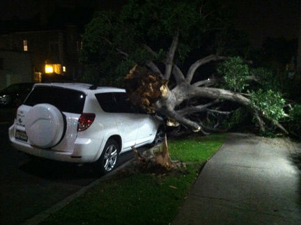 "<div class=""meta ""><span class=""caption-text "">ABC7 viewer Eddie Shamie sent in this photo of a tree on top of a car in Los Angeles, Calif., on Wednesday, Nov. 30, 2011.  When You Witness breaking news, or even something extraordinary, send pictures and video to video@myabc7.com, or send them to @abc7 on Twitter (KABC Photo/ Eddie Shamie)</span></div>"