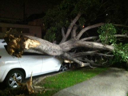 ABC7 viewer Eddie Shamie sent in this photo of a tree on top of a car in Los Angeles, Calif., on Wednesday, Nov. 30, 2011.  When You Witness breaking news, or even something extraordinary, send pictures and video to video@myabc7.com, or send them to @abc7 on Twitter <span class=meta>(KABC Photo&#47; Eddie Shamie)</span>