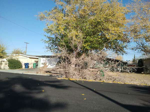 ABC7 viewer Lou Fav sent in this photo of a fallen tree in Palmdale, Calif., on Wednesday, Nov. 30, 2011.  When You Witness breaking news, or even something extraordinary, send pictures and video to video@myabc7.com, or send them to @abc7 on Twitter <span class=meta>(KABC Photo&#47; Lou Fav)</span>