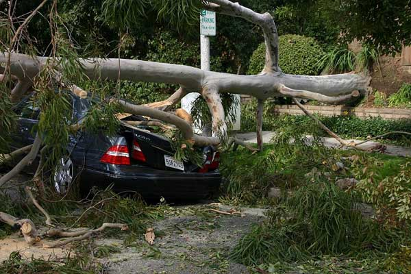 ABC7 viewer Robert Leon sent in this photo of a car crushed by a fallen tree in Pasadena, Calif. on Thursday, Dec. 1, 2011. &#160;When you witness breaking news happen, send your photos to video@myabc7.com, or send them to @abc7 on Twitter  <span class=meta>(KABC Photo&#47; ABC7 viewer Robert Leon)</span>
