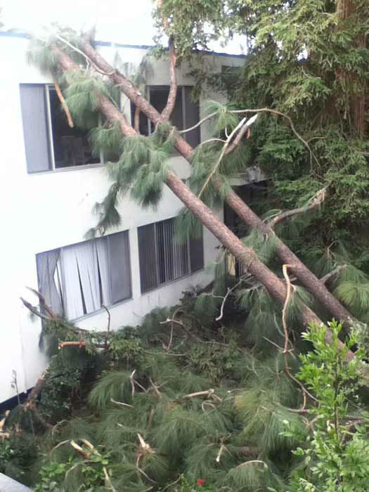 ABC7 viewer Daniel Oh sent in this photo of a tree falling onto a building in Arcadia, Calif. on Thursday, Dec. 1, 2011. &#160;When you witness breaking news happen, send your photos to video@myabc7.com, or send them to @abc7 on Twitter <span class=meta>(KABC Photo&#47; ABC7 viewer Daniel Oh)</span>