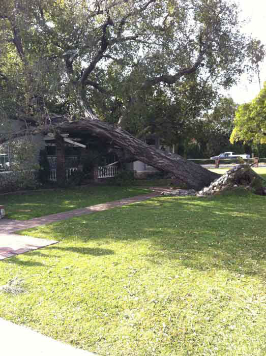 "<div class=""meta ""><span class=""caption-text "">ABC7 viewer Meghan Boyce sent in this photo of a fallen tree in Arcadia, Calif. on Thursday, Dec. 1, 2011.  When you witness breaking news happen, send your photos to video@myabc7.com, or send them to @abc7 on Twitter (KABC Photo/ ABC7 viewer Meghan Boyce)</span></div>"