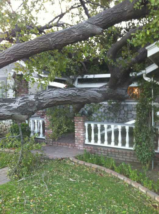 ABC7 viewer Meghan Boyce sent in this photo of a fallen tree in Arcadia, Calif. on Thursday, Dec. 1, 2011. &#160;When you witness breaking news happen, send your photos to video@myabc7.com, or send them to @abc7 on Twitter <span class=meta>(KABC Photo&#47; ABC7 viewer Meghan Boyce)</span>