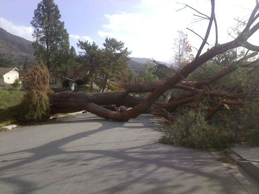 ABC7 viewer Ernie Sanche sent in this photo of a fallen tree on Elkins Street in Arcadia, Calif. on Thursday, Dec. 1, 2011. &#160;When you witness breaking news happen, send your photos to video@myabc7.com, or send them to @abc7 on Twitter <span class=meta>(KABC Photo&#47; ABC7 viewer Ernie Sanche)</span>