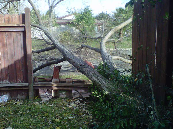 An ABC7 viewer sent in this photo of a fallen tree in Covina, Calif. on Thursday, Dec. 1, 2011. &#160;When you witness breaking news happen, send your photos to video@myabc7.com, or send them to @abc7 on Twitter <span class=meta>(KABC Photo)</span>