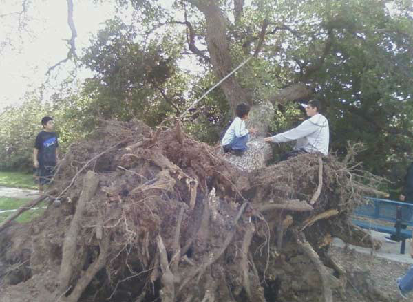 ABC7 viewer Geraldine Delgado sent in this photo of a fallen tree at Slauson Park in Azusa, Calif. on Thursday, Dec. 1, 2011. &#160;When you witness breaking news happen, send your photos to video@myabc7.com, or send them to @abc7 on Twitter <span class=meta>(KABC Photo&#47; ABC7 viewer Geraldine Delgado)</span>