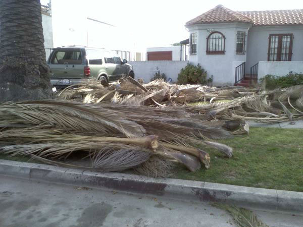 ABC7 viewer Denise Thomas sent in this photo of a fallen tree branches in Los Angeles, Calif. on Thursday, Dec. 1, 2011. &#160;When you witness breaking news happen, send your photos to video@myabc7.com, or send them to @abc7 on Twitter <span class=meta>(KABC Photo)</span>