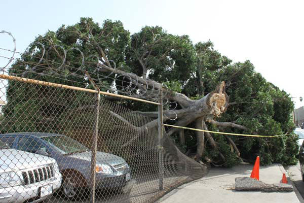 ABC7 viewer Brian Pickering sent in this photo of wind damage on Avenue 21 in Los Angeles, Calif. on Thursday, Dec. 1, 2011. &#160;When you witness breaking news happen, send your photos to video@myabc7.com, or send them to @abc7 on Twitter <span class=meta>(KABC Photo&#47; ABC7 viewer Brian Pickering)</span>