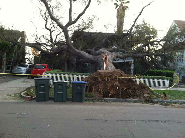 "<div class=""meta ""><span class=""caption-text "">ABC7 viewer Clark Hahne III sent in this photo of a fallen tree in Pasadena, Calif. on Thursday, Dec. 1, 2011.  When you witness breaking news happen, send your photos to video@myabc7.com, or send them to @abc7 on Twitter (KABC Photo/ ABC7 viewer Clark Hahne III)</span></div>"