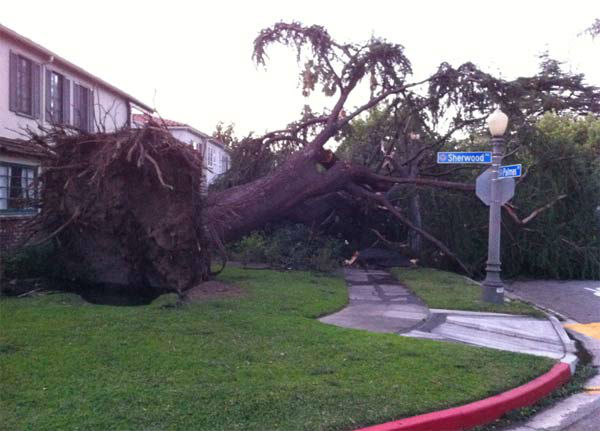 ABC7 viewer Andre Moye sent in this photo of a fallen tree in San Marino, Calif. on Thursday, Dec. 1, 2011. &#160;When you witness breaking news happen, send your photos to video@myabc7.com, or send them to @abc7 on Twitter <span class=meta>(KABC Photo&#47; ABC7 viewer Andre Moye)</span>