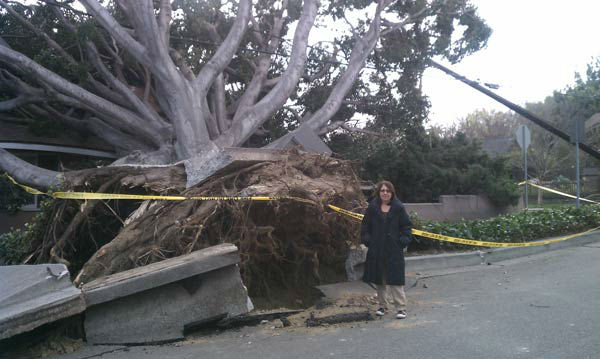 ABC7 viewer Mitch Sechrest sent in this photo of a fallen tree in Sierra Madre, Calif. on Thursday, Dec. 1, 2011. &#160;When you witness breaking news happen, send your photos to video@myabc7.com, or send them to @abc7 on Twitter <span class=meta>(KABC Photo&#47; ABC7 viewer Mitch Sechrest)</span>