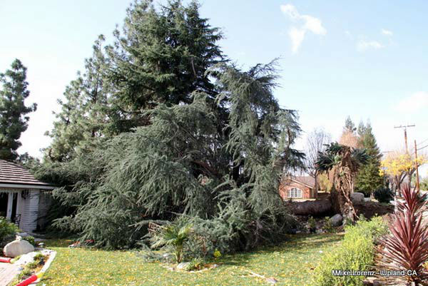 ABC7 viewer Michael Lorenz sent in this photo of a tree that fell in front of a home in Upland, Calif. on Thursday, Dec. 1, 2011. &#160;When you witness breaking news happen, send your photos to video@myabc7.com, or send them to @abc7 on Twitter <span class=meta>(KABC Photo&#47;ABC7 viewer Michael Lorenz)</span>