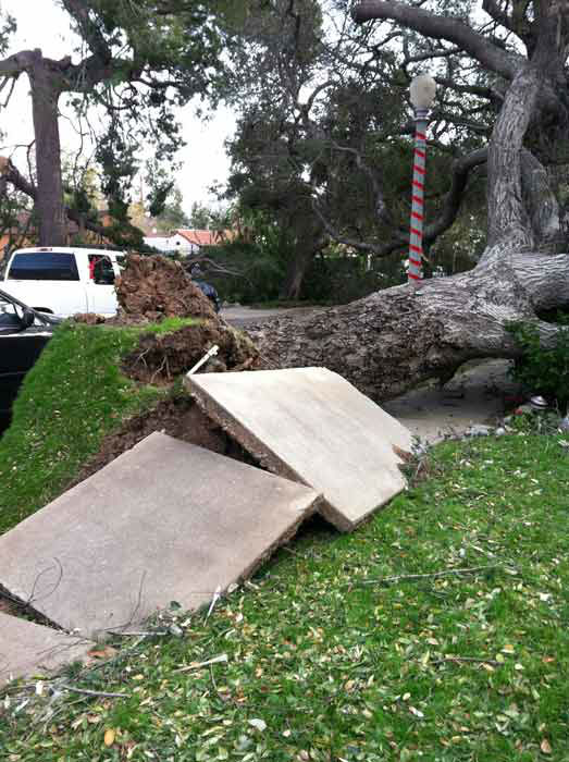 ABC7 viewer Patty Henrich sent in this photo of a tree that fell on Vinedo Avenue in Pasadena, Calif. on Thursday, Dec. 1, 2011. &#160;When you witness breaking news happen, send your photos to video@myabc7.com, or send them to @abc7 on Twitter <span class=meta>(KABC Photo&#47; ABC7 viewer Patty Henrich)</span>