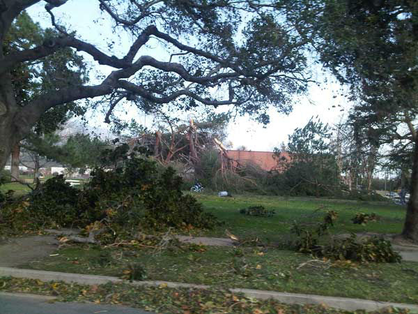 An ABC7 viewer sent in this photo of fallen trees at a park in Pasadena, Calif. on Thursday, Dec. 1, 2011. &#160;When you witness breaking news happen, send your photos to video@myabc7.com, or send them to @abc7 on Twitter <span class=meta>(KABC Photo)</span>