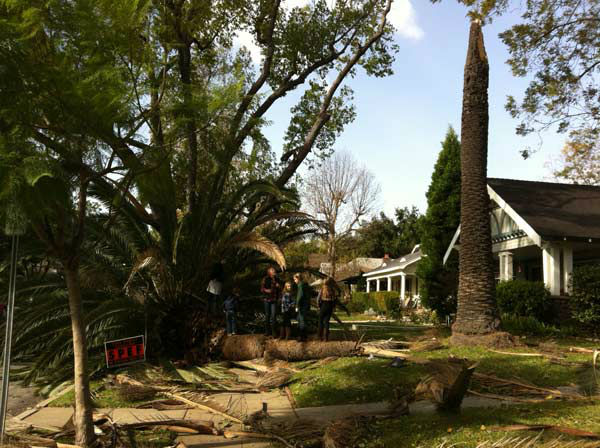 ABC7 viewer Rachel Fox sent in this photo of a tree that fell in South Pasadena, Calif. on Thursday, Dec. 1, 2011. &#160;When you witness breaking news happen, send your photos to video@myabc7.com, or send them to @abc7 on Twitter <span class=meta>(KABC Photo&#47; ABC7 viewer Rachel Fox)</span>