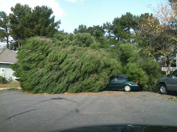 ABC7 viewer Amber sent in this photo of a tree that fell on a car in Rancho Cucamonga, Calif. on Thursday, Dec. 1, 2011. &#160;When you witness breaking news happen, send your photos to video@myabc7.com, or send them to @abc7 on Twitter  <span class=meta>(KABC Photo&#47; ABC7 viewer Amber)</span>