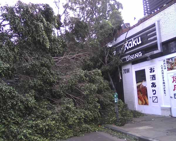 An ABC7 viewer sent in this photo of a fallen tree along Green Street in Pasadena, Calif. on Thursday, Dec. 1, 2011. &#160;When you witness breaking news happen, send your photos to video@myabc7.com, or send them to @abc7 on Twitter  <span class=meta>(KABC Photo&#47; ABC7 viewer)</span>