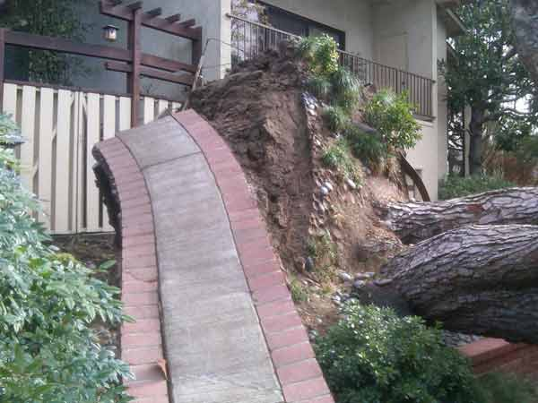 An ABC7 viewer sent in this photo of an uprooted tree on Pine Bluff Drive in Pasadena, Calif. on Thursday, Dec. 1, 2011. &#160;When you witness breaking news happen, send your photos to video@myabc7.com, or send them to @abc7 on Twitter  <span class=meta>(KABC Photo&#47; ABC7 viewer)</span>