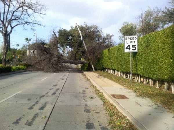 "<div class=""meta ""><span class=""caption-text "">Strong winds knocked down a tree in Arcadia, Calif., on Thursday, Dec. 1, 2011. (KABC Photo)</span></div>"