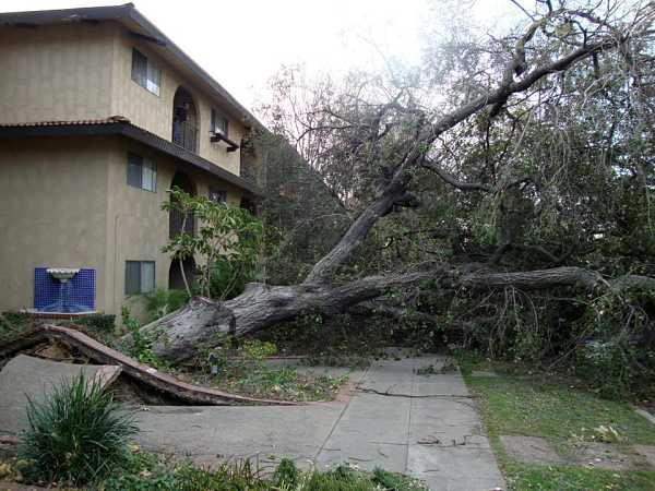 "<div class=""meta ""><span class=""caption-text "">ABC7 viewer Cindy Nguyen took this photo of a tree that toppled in front of a home on El Nido Avenue in Pasadena on Thursday, Dec. 1, 2011.  When You Witness breaking news, or even something extraordinary, send pictures and video to video@myabc7.com, or send them to @abc7 on Twitter (KABC Photo/ ABC7 viewer Cindy Nguyen)</span></div>"
