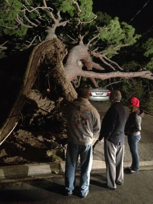 Strong winds knocked over a tree in Southern California on Thursday, Dec. 1, 2011. &#160;When you witness breaking news happen, send your photos to video@myabc7.com, or send them to @abc7 on Twitter <span class=meta>(KABC Photo)</span>