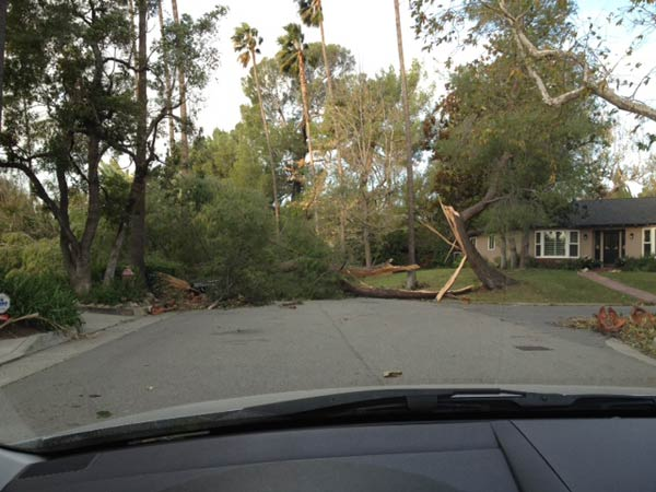 A tree fell on top of a vehicle in Altadena, Calif., on Thursday, Dec. 1, 2011. <span class=meta>(KABC Photo)</span>