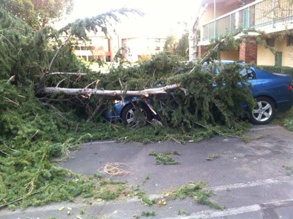 A tree fell on top of a car in Arcadia, Calif., on Thursday, Dec. 1, 2011. <span class=meta>(KABC Photo)</span>