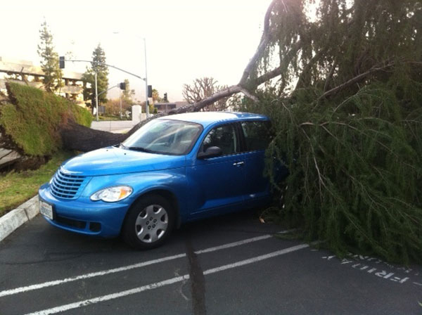 "<div class=""meta ""><span class=""caption-text "">A tree fell on top of a car in Arcadia, Calif., on Thursday, Dec. 1, 2011. (KABC Photo)</span></div>"