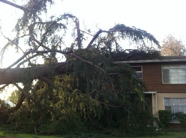 A tree fell on top of a home on Fairview and Baldwin avenues in Arcadia, Calif., on Thursday, Dec. 1, 2011. <span class=meta>(KABC Photo)</span>