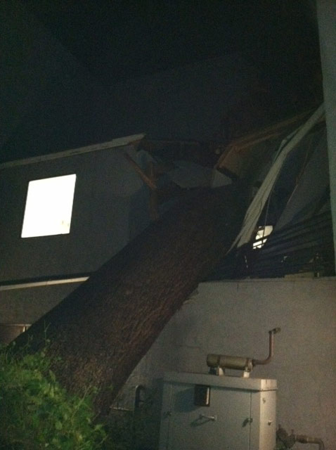 A tree fell on a building on the 1200 block of Hudson Avenue in Pasadena on Wednesday, Nov. 30, 2011.  <span class=meta>(KABC Photo)</span>