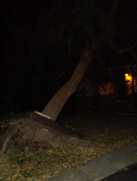 ABC7 Danyel Crawford sent in this photo of an uprooted tree in Glendale, Calif., on Wednesday, Nov. 30, 2011.  When You Witness breaking news, or even something extraordinary, send pictures and video to video@myabc7.com, or send them to @abc7 on Twitter <span class=meta>(KABC Photo&#47; Danyel Crawford)</span>