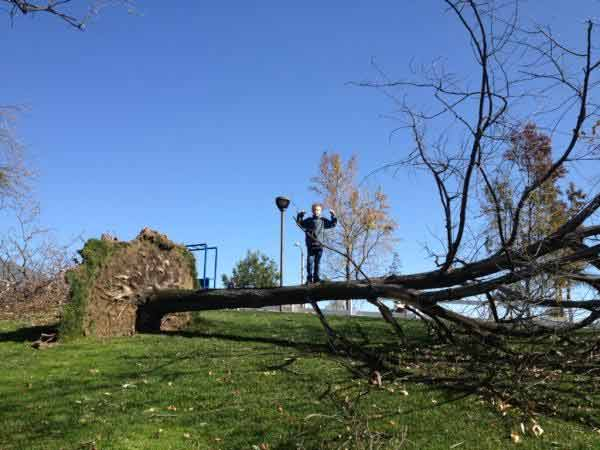 An ABC7 viewer sent in this photo of fallen tree...