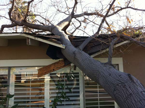 ABC7 viewer Brian Weed sent in this photo of a tree that fell on his mother's house in Redlands on Saturday, Dec. 3, 2011.