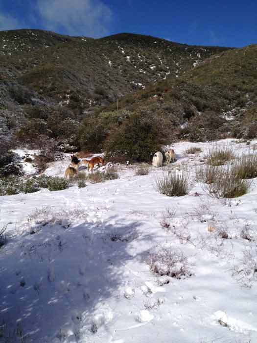 "<div class=""meta image-caption""><div class=""origin-logo origin-image ""><span></span></div><span class=""caption-text"">ABC7 viewers David and Janice sent in this photo of snow in Leona Valley, Calif. after a storm passed over Southern California on Sunday March, 18, 2012.  When You Witness breaking news, or even something extraordinary, send pictures and video to video@myabc7.com, or send them to @abc7 on Twitter or our ABC7 Facebook page. (ABC7 viewers David and Janice)</span></div>"