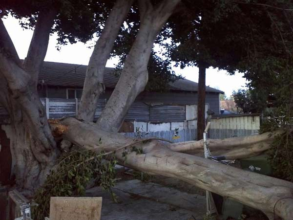 ABC7 viewer David Benavides posted this photo on the ABC7 Facebook page of a fallen tree in Inglewood Lake after a storm passed over Southern California on Sunday March, 18, 2012.