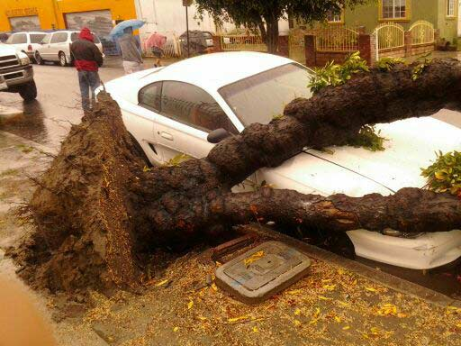 ABC7 viewer Marlene Cortez of South Gate sent in this photo of an uprooted tree that fell on a parked car as a powerful storm passed over Southern California on Sunday March, 25, 2012.  When You Witness breaking news, or even something extraordinary, send pictures and video to video@myabc7.com, or send them to @abc7 on Twitter or our ABC7 Facebook page. <span class=meta>(ABC7 viewer Marlene Cortez)</span>