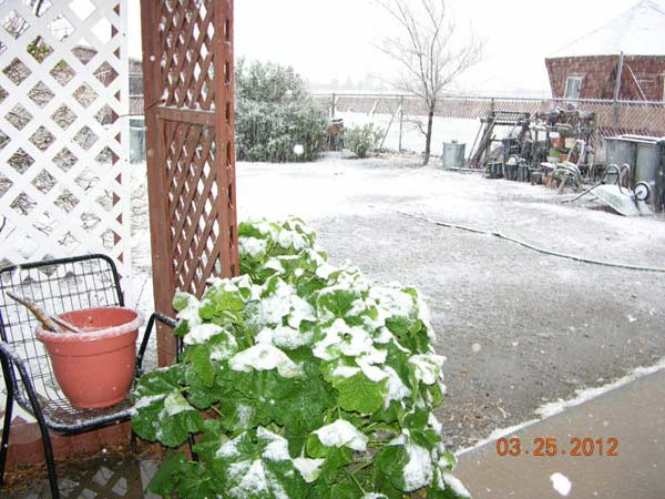 ABC7 viewer Charline Dosenbach posted this photo on the ABC7 Facebook page of snow in Phelan as a powerful storm passed over Southern California on Sunday March, 25, 2012.