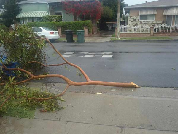 ABC7 viewer Jennifer Taylor posted this photo on the ABC7 Facebook page of a tree branch that snapped in the City of Commerce as a powerful storm passed over Southern California on Sunday March, 25, 2012.