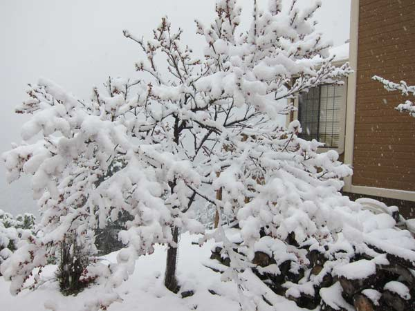"<div class=""meta ""><span class=""caption-text "">ABC7 employee Matt Wurster sent in this photo of snow in Pine Mountain Club in Frazier Park as a powerful storm passed over Southern California on Sunday March, 25, 2012.  When You Witness breaking news, or even something extraordinary, send pictures and video to video@myabc7.com, or send them to @abc7 on Twitter or our ABC7 Facebook page. (ABC7 employee Matt Wurster)</span></div>"
