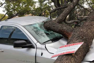 ABC7 viewer Jennifer Oberlander sent in this photo taken by her 10-year-old daughter, Nicole, of a fallen tree on top of a car in Arcadia. When you witness breaking news happen, send your photos to video@myabc7.com, or send them to @abc7 on Twitter <span class=meta>(KABC Photo&#47; ABC7 viewer Jennifer Oberlander)</span>
